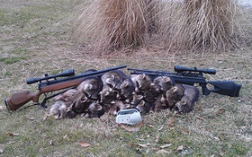 Airguns Are Perfect For Hunting Raccoons