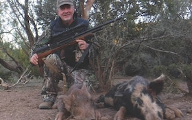 Airguns and feral hogs: going small bore for small boar