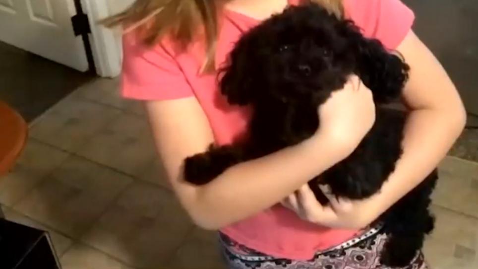 Tiny Hero Angel Dog Saves Family From Invading Black Bear