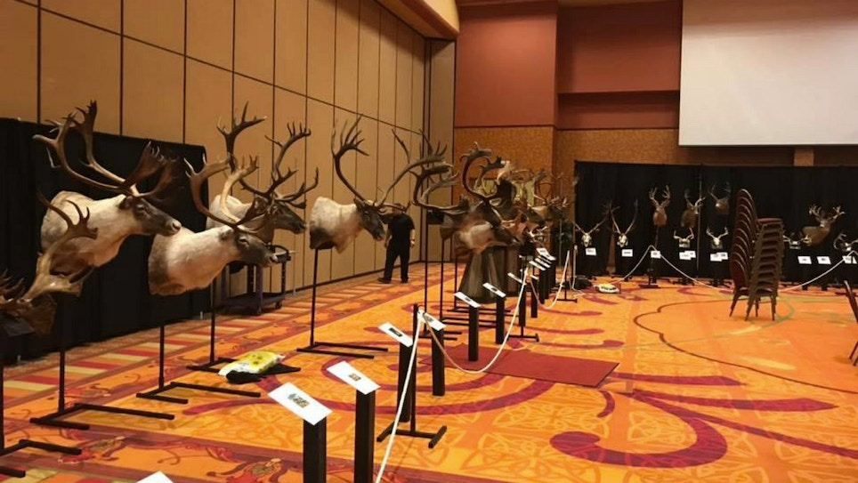 5 New Archery World Records Showcased at Recent Pope and Young Club Convention