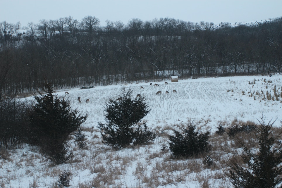 The Role of Predator Control in Land/Deer Management