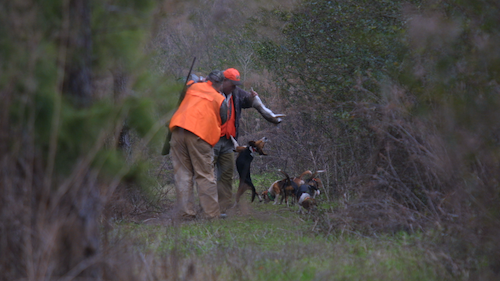 A hunter shows off the rabbit his pack of hounds were pursuing, giving them a good snoot of bunny scent before making another cast. (Photo: Alan Clemons)