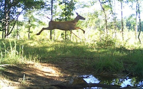 Stop Shooting at Running Whitetails