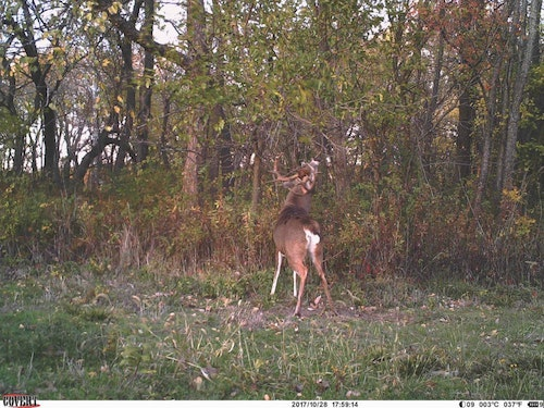 Trail cameras are a big part of hunting away from home. A buck like this one will keep you coming back year after year.