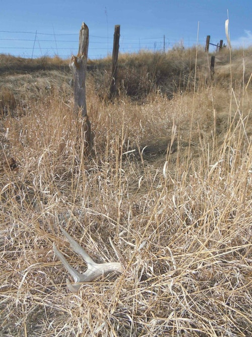 Edges, including fence lines, can reveal trails you could use as ambush points during a fall hunt. Keep your eyes open for whitetail clues while shed hunting.