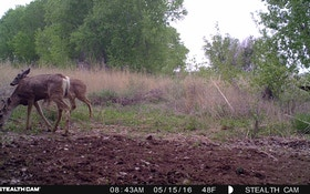 It's Never Too Early For Trail Cameras