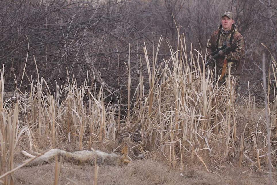 Scent Control Tactics for Close-Quarters Coyotes