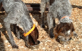 When To Feed Your Hunting Dog