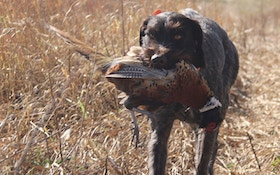 Hunting Dog Questions And Answers