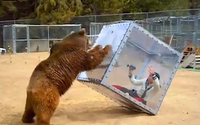 Bear Not Happy With Reality Show