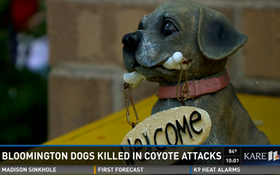 Officials Warn Of Coyote Attacks On Small Dogs