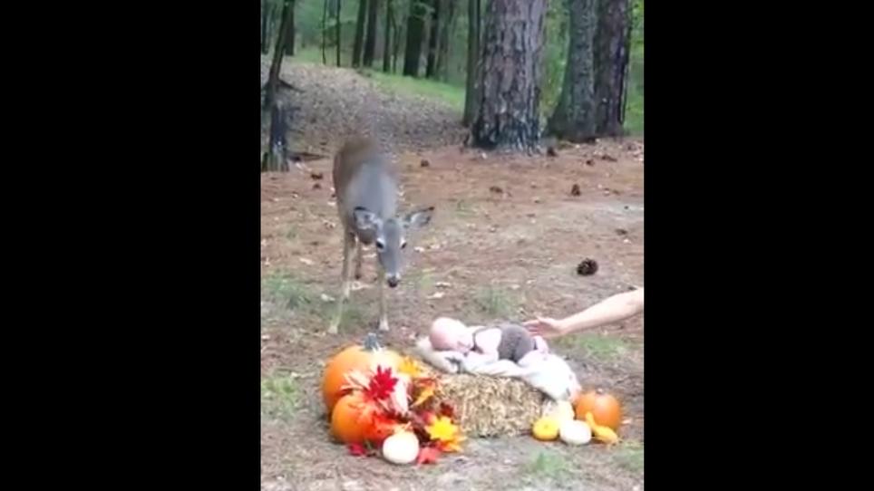 Deer Photobombs Infant Photo Shoot