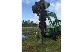 15-Foot, 800-Pound Alligator Killed In Florida