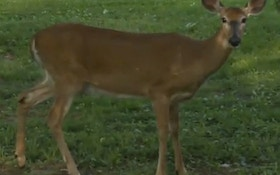 Deer Terrorizes Woman Who's Now Afraid To Leave Her Home