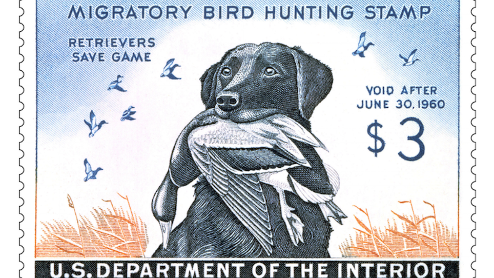 The duck-stamp dog
