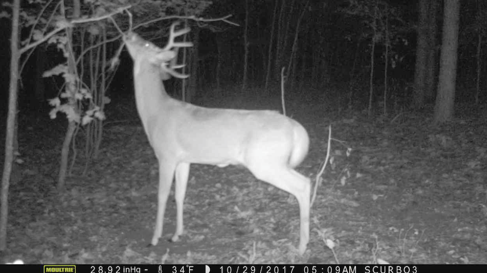5 Scrape myths whitetail deer hunters should understand
