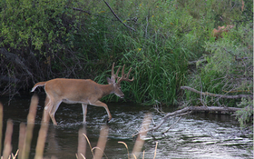 Do These 5 Things This Summer to Shoot a Buck This Fall