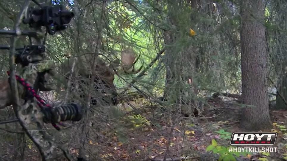 Throwback Thursday Moose Bowhunting Video: Vicki Cianciarulo Arrows Monster Bull at 5 Feet!