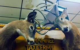 Weird Taxidermy on Twitter, Instagram
