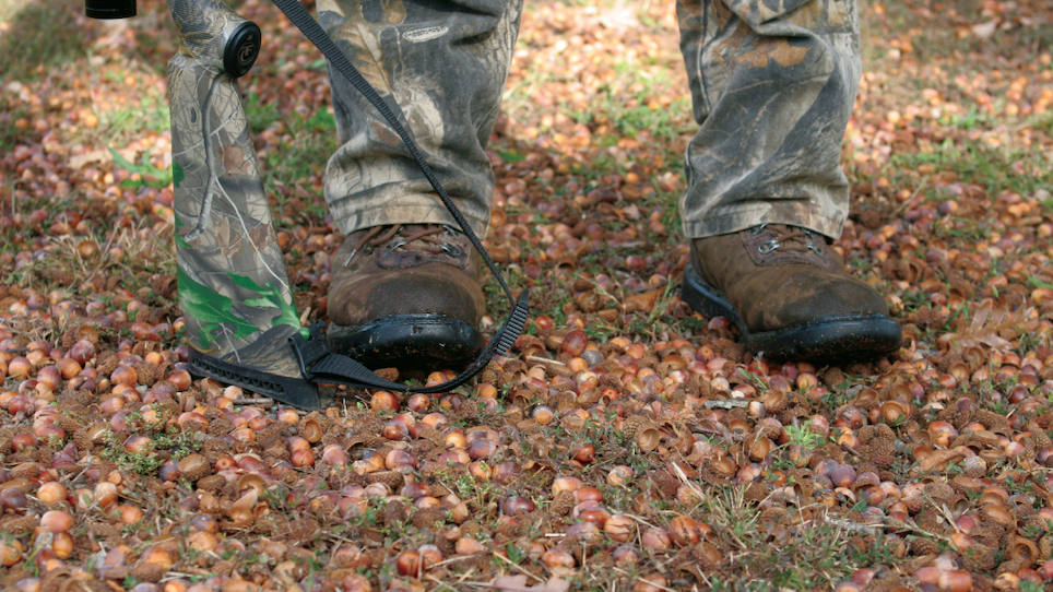 When There's Too Many Acorns for Deer Hunters