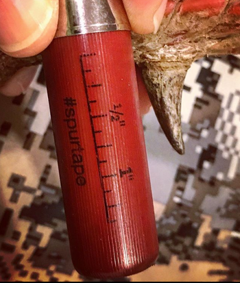 "Federal Ammunition, the company behind premium loads like Grand Slam and HEAVYWEIGHT TSS, has made it easy to measure and post spur lengths. There is a small tape measure printed on the hull, in 1/8-inch increments, along with the hashtag ""spurtape."" Photo: Alan Clemons"