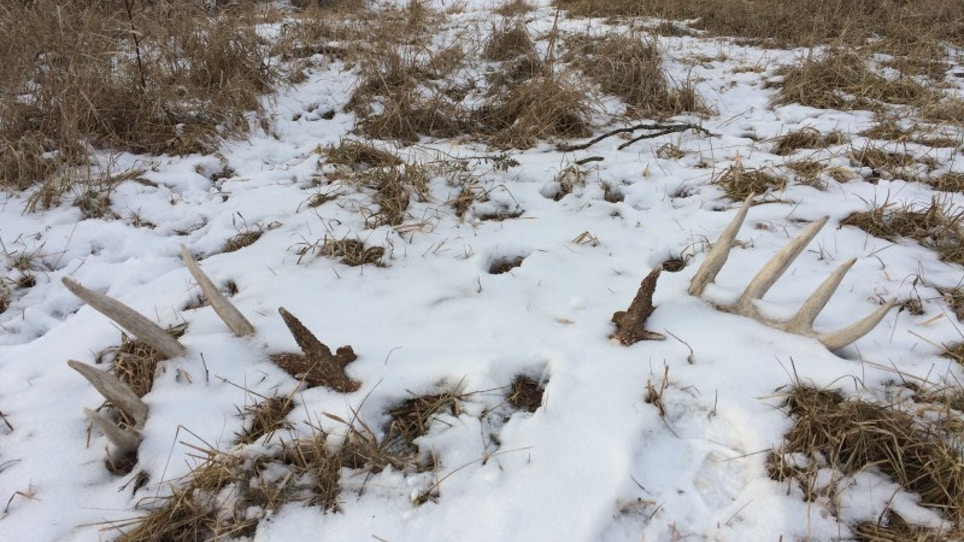 Why this spring's sheds won't lead to next fall's buck