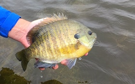 3 Tips for Catching Spawning Sunfish