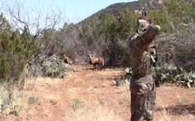 VIDEO: Spot And Stalk Rams At Dos Plumas Ranch