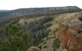 Spring Elk Scouting