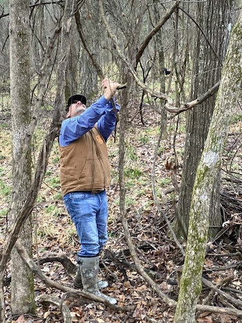 Pulling on vines is a great way to get squirrels stirring. (Photo: Alan Clemons)