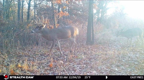 Trail cams are a powerful tool for hunters to learn a buck's core area. Photo courtesy of Stealth Cam Facebook.