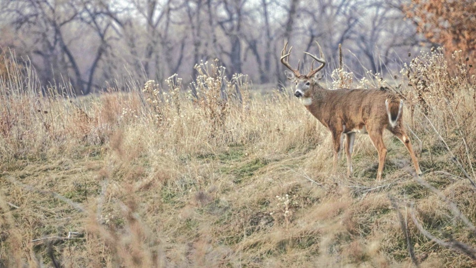 Tips for Bowhunting Whitetail Bedding Areas