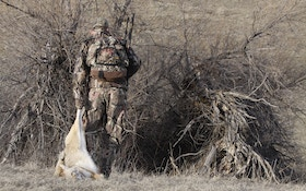 Shortcuts to Finding, Killing More Coyotes