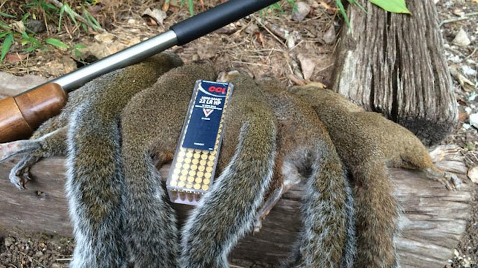 Squirrel Hunting Suppressed
