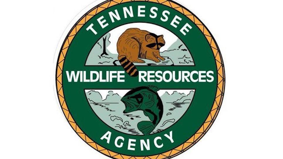 Tennessee leaders to meet over hog hunting regs