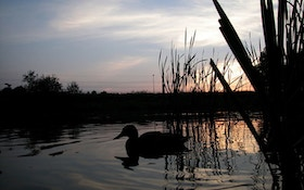 Commission OKs Dates For Arkansas Duck Hunting Season