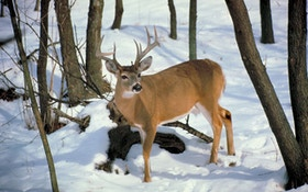 More Than 28,000 Win Deer Hunting Permits In Maine Lottery