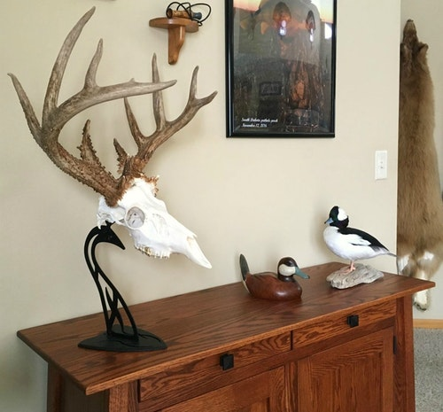 The Table Hooker is an attractive and affordable to way to display European mounts on a desk or shelf.