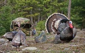 Turkeys All Day Long
