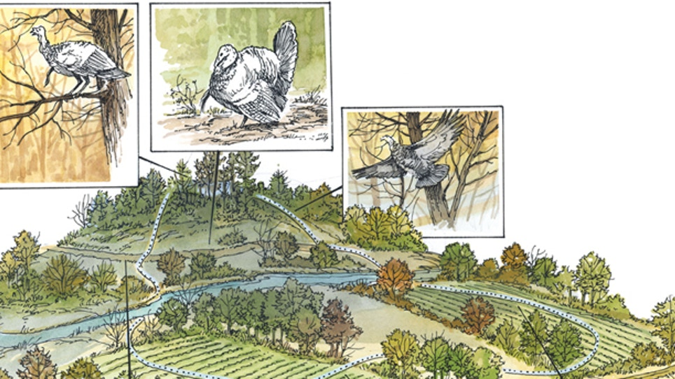 Get To Know a Wild Turkey's Daily Routine During Breeding Season