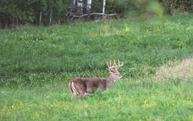 Roadtripping for a Velvet Whitetail Buck