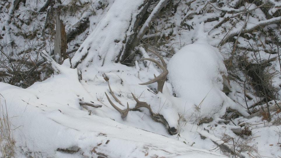 Wintertime Whitetail Aid