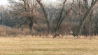 How to Target Whitetail Bucks During the Rut's Lockdown