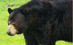 South Lake Tahoe Man Says He Shot Black Bear In Self-Defense