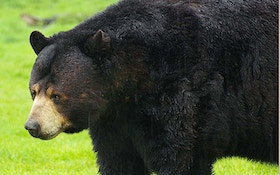 Bear Seasons Open With Changes