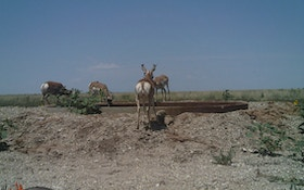 How Soon Is Too Soon For Your Pronghorn Blind?
