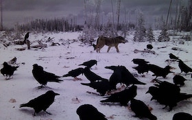 From the Readers: A Guide for Novice Wolf Hunters
