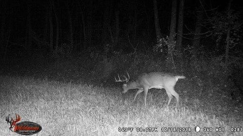 Trail cameras can provide us with the confidence that deer are in the area, but they can also falsely lead us to believe deer are not there, when truthfully they are. That's why trail cameras work well as a supplement, rather than a tool that's relied on entirely.