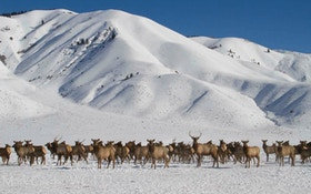 Wyoming CWD Working Group Announced