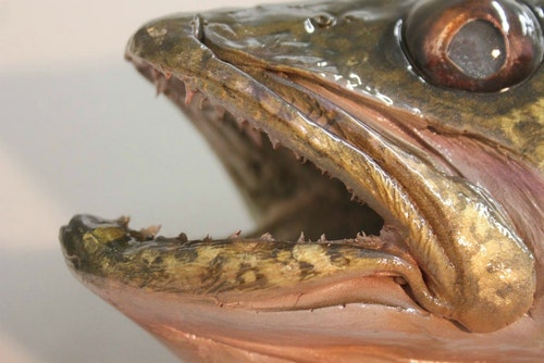 Jimmy Lawrence can paint any fish. Here's a closeup showing the fine detail work of a walleye.